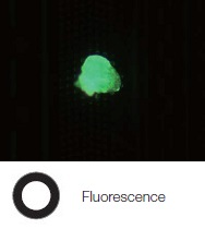 Photoresist residue on a semiconductor wafer - Fluorescence
