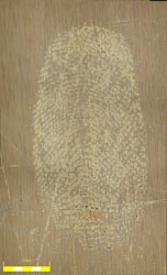 2C Fingerprint Brass wiped with wool